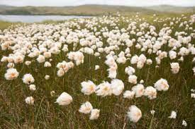 Tundra Land Biome Description and Characteristics