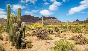 What Are The Special Adaptations Of Desert Plants? - WorldAtlas