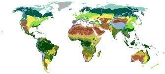 Vegetation - Wikipedia