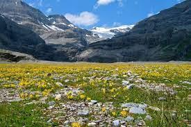 Alpine Tundra Biome: Location, Climate, Vegetation and Animals - Conserve  Energy Future